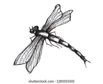 Black dragonfly on white background isolated. Dragonfly Graphic Realistic Line Ink Drawing. Hand-drawn  illustration.
