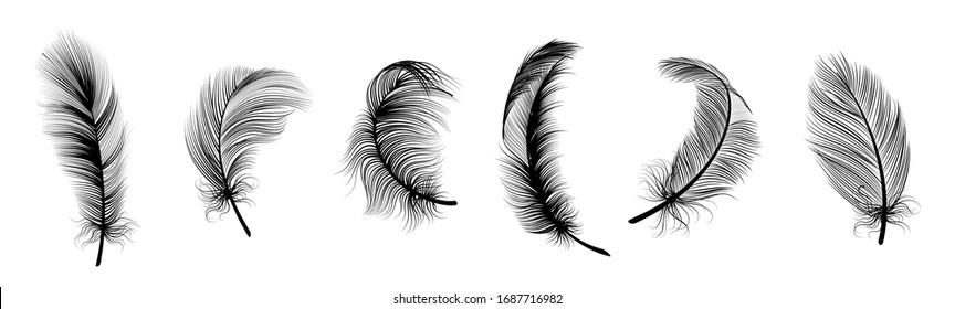 Black fluffy feather. Hand drawing vintage art realistic quill feathers for pen detailed isolated elegant silhouette sketch bird plume set
