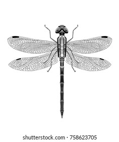 Black grafic dragonfly