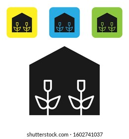 Black Home greenhouse and plants icon isolated on white background. Set icons colorful square buttons.