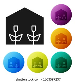Black Home greenhouse and plants icon isolated on white background. Set icons colorful circle buttons.