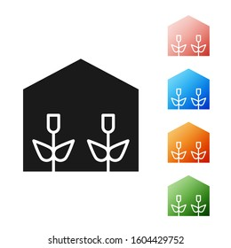 Black Home greenhouse and plants icon isolated on white background. Set icons colorful.