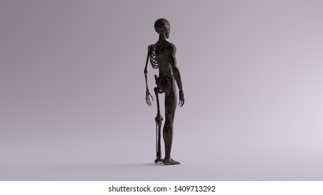 Black Iron Ecorche Half Skeletal System Half Muscle System Anatomical Model 3 Quarter Rear Right View 3d illustration 3d render