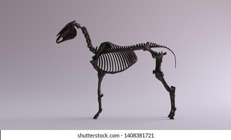 Black Iron Horse Skeletal System Anatomical Model Left View 3d illustration 3d render