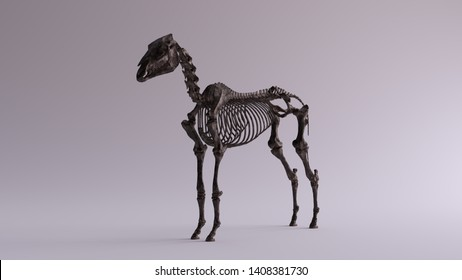 Black Iron Horse Skeletal System Anatomical Model 3 Quarter Front Left View 3d illustration 3d render