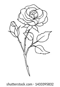 Black lines flower, rose sketch. Hand drawing floral illustration. Perfectly for greeting card, tattoo,  poster, banner. Isolated on white background.