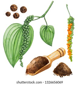 black pepper watercolor illustration.