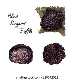 Black Perigord Truffle set, growing in ground, whole and cut, isolated hand painted watercolor illustration