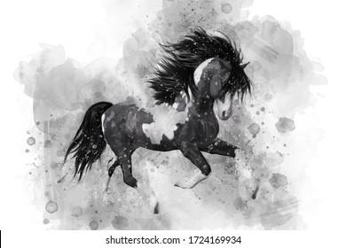 Black run horse in watercolor