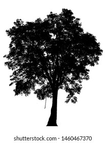 Black shadows, large trees that are completely isolated on a white background.