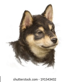 black shiba inu, puppy portrait on white, painted, rough brushstroke painterly look