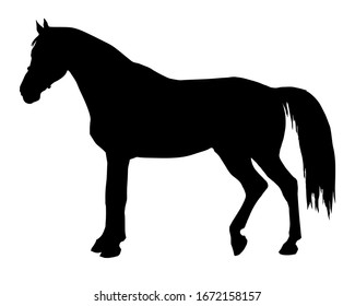 black silhouette of a standing German horse isolated on a white background