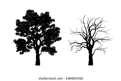 Black silhouette of tree. Forest plant. Isolated image of branchs
