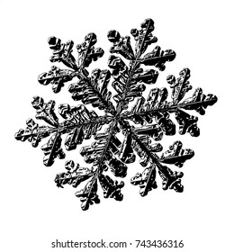 Black snowflake on white background. Illustration based on macro photo of real snow crystal: large snowflake with fine hexagonal symmetry, six long elegant arms and complex, ornate shape.