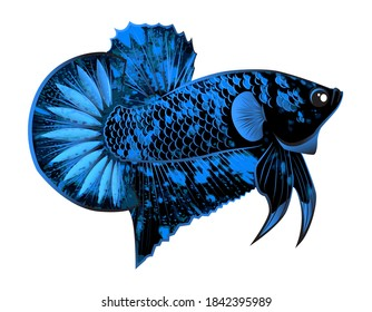 black star betta fish  on white background with clipping part for logo