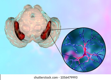 Black substance of the midbrain and its dopaminergic neurons, 3D illustration. Black substance regulates movement and reward, its degeneration is a key step in development of Parkinson's disease