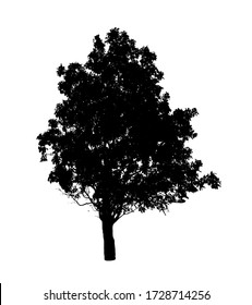 black tree silhouettes isolated on white background. Clipping path.