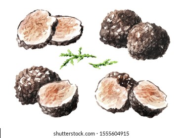 Black truffle mushrooms with forest green moss branch set, Watercolor hand drawn illustration  isolated on white background