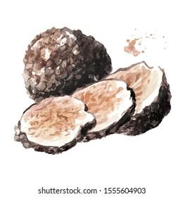Black truffle mushrooms. Watercolor hand drawn illustration isolated on white background