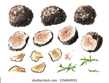 Black truffles and slices  mushroom set. Watercolor hand drawn illustration isolated on white background
