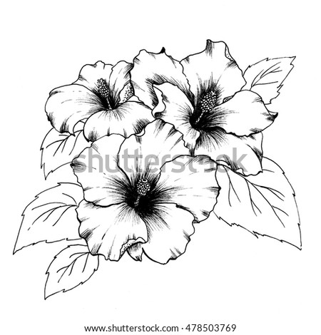 Black White Branch Hibiscus Flowers Isolated Stock Illustration