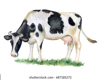 Black and white cow isolated on white background. Watercolor. Illustration. Template. Picture