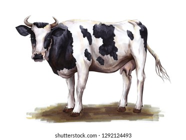 black and white cow standing on the grass