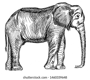 black and white drawing of african elephant