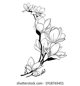 Black and white illustration of flowers. Suitable for tattoo, postcard, magazine