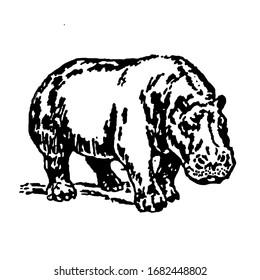 Black and white illustration of hippopotamus isolated on white background