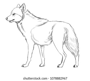 Black and white illustration of a standing wolf
