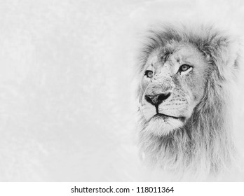Black and White Image of Lion Face on Card Banner