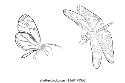 Black and white ink illustration of a butterfly and a dragonfly for logo or decorative element. Coloring page. Fine art on white background.