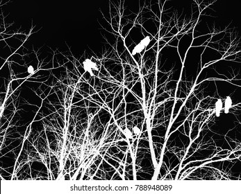 black and white inverted gothic horror image of crows on a tree in silhouette