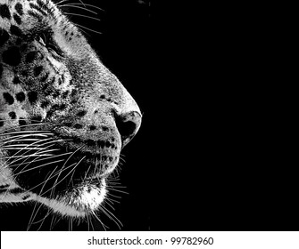 Black and White Isolated Leopard Face Card