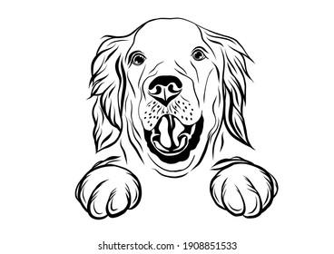 Black and white Labrador on the white background