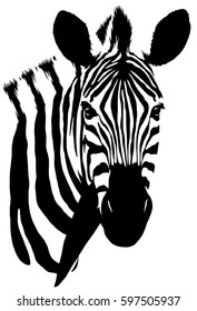 black and white linear paint draw zebra illustration