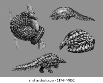 Black and white monochromatic freehand sketch of a pangolin
