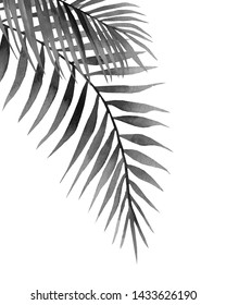 Black and white palm branches. Tropical leaves. Watercolour illustration isolated on white background.
