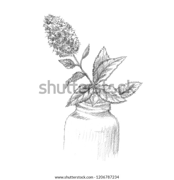 Black White Realistic Pencil Sketch Beautiful Stock
