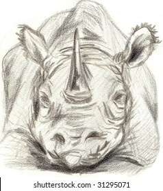 Black and white Rhinoceros sketch pointed straight at the viewer, looking angry