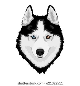 Black and white Siberian husky with multi-colored eyes. Hand drawn portrait of dog.