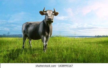 Black and white single cow grazing in a green grassy field on a farmland on a bright, sunny summer day. Cow character design on a farm grass meadow landscape for milk, dairy advertising key visual. 3D