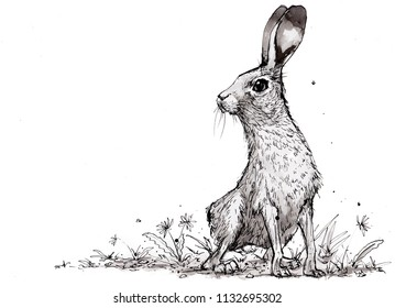 Black and white sketch of a hare or rabbit, wild hare, looking over shoulder. the hare could be looking for danger, with ears up, listening. Traditional sketch of a hare with space for text.