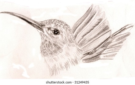 Black and white sketch of a hummingbird, looking proudly to one side