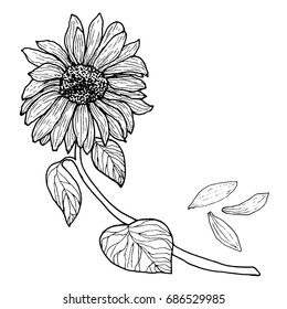 Black white Sunflower on a branch with leaves. Flower bud, isolated. Raster illustration design.Color page for adults and children. Book, textile, print, poster, design, sticker,card
