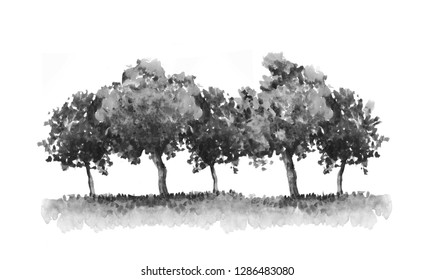 Black and white trees ink watercolor illustration. Abstract nature background, forest border, hand drawn