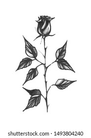 Black and white watercolor illustration. Tattoo sketch in traditional style. Black rose