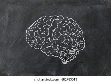 blackboard. Brain writing with chalk,message concept written by chalk,Crayon,Brain drawing