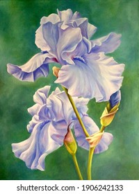blau iris on cool green background oil painting on canvas